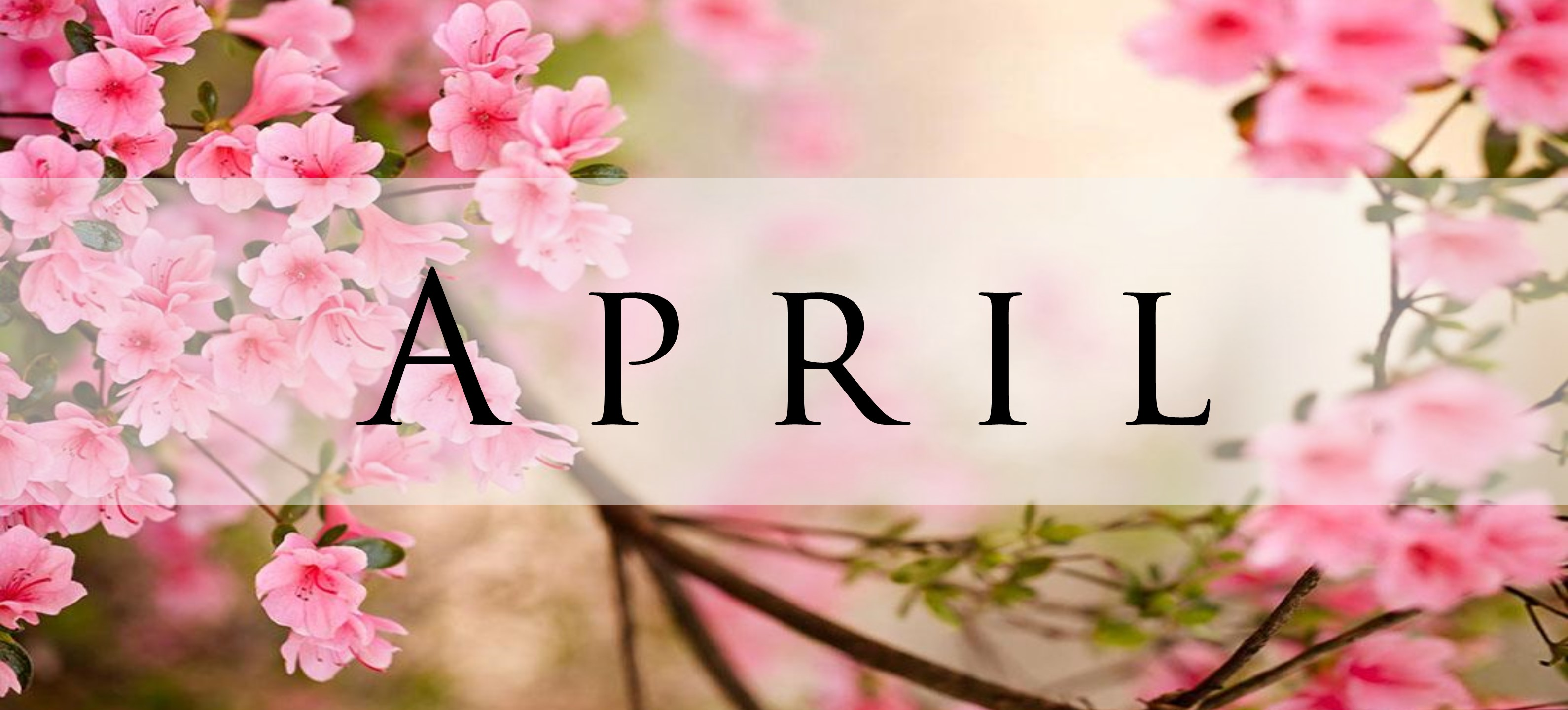National Holidays April 2019 pink blossoms with the word April across the cover photo